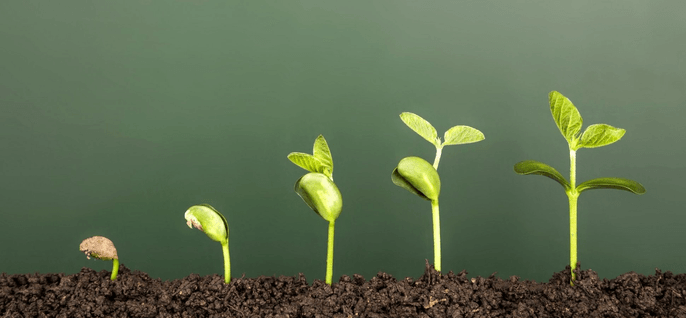 an image of a plant growing reflecting the concept of Scalability