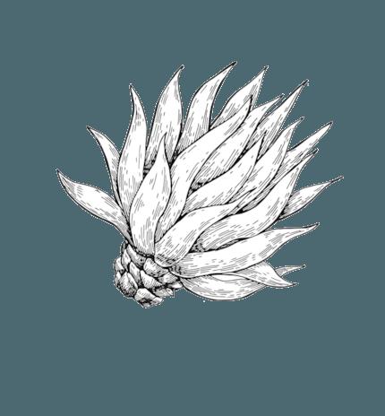 Mezcal Antifaz 100% de agave silvestre