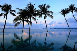 Celes Koh Samui palm trees