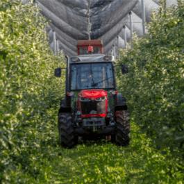 MF 3700 - szerokość pracy ciągnika sadowniczego Massey Ferguson